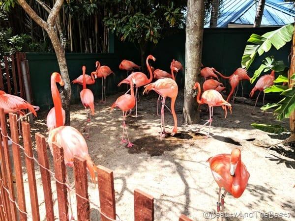 Flamingos Sea World Beauty and the Beets