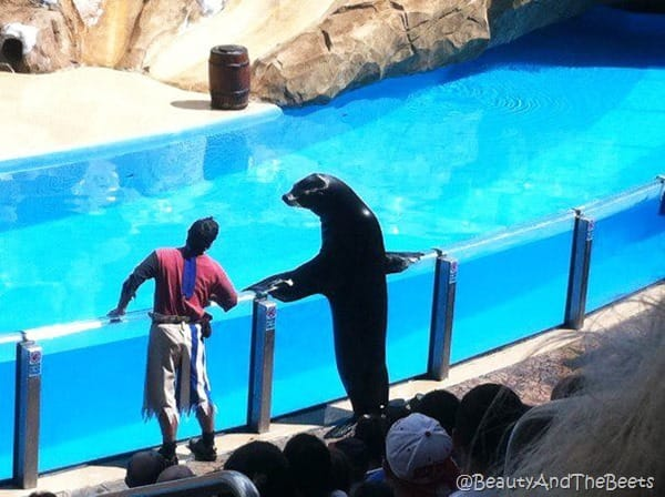 Sea World (16)