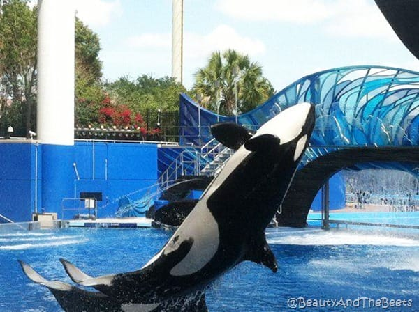 Sea World (19)