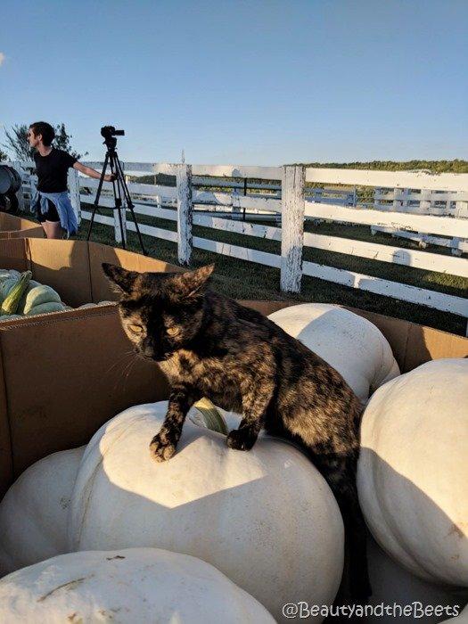#FarmFoodTour Kansas Beauty and the Beets Juniper Farms pumpkins