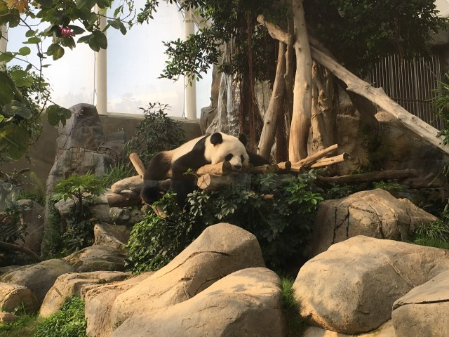 We Chose Ocean Park Over Disney Land on Our Hong Kong Trip - Here's Why!