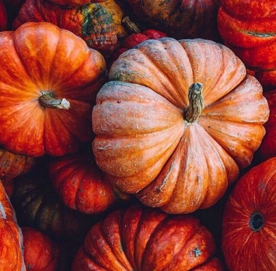 Blogtober Pumpkins