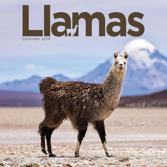 Llama Calendar - Stocking Filler for him