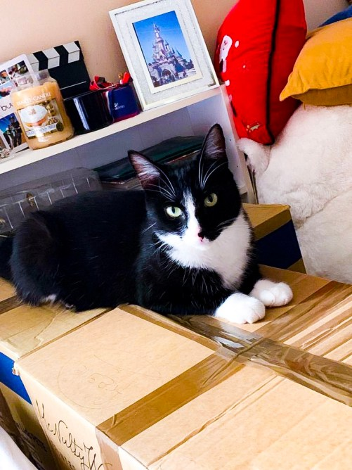 packing boxes - august 2019