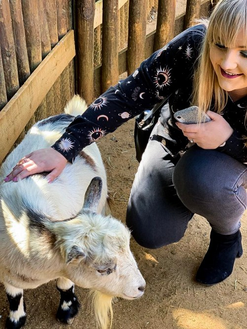 Goats - Colchester Zoo