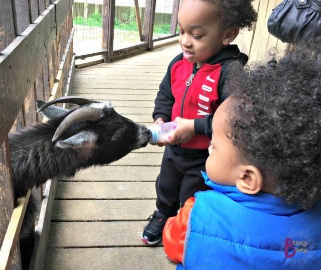 Boys Snake and Animal Farm