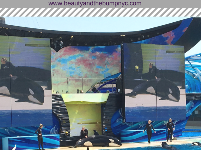 SeaWorld San Diego California Family Vacation Highlight
