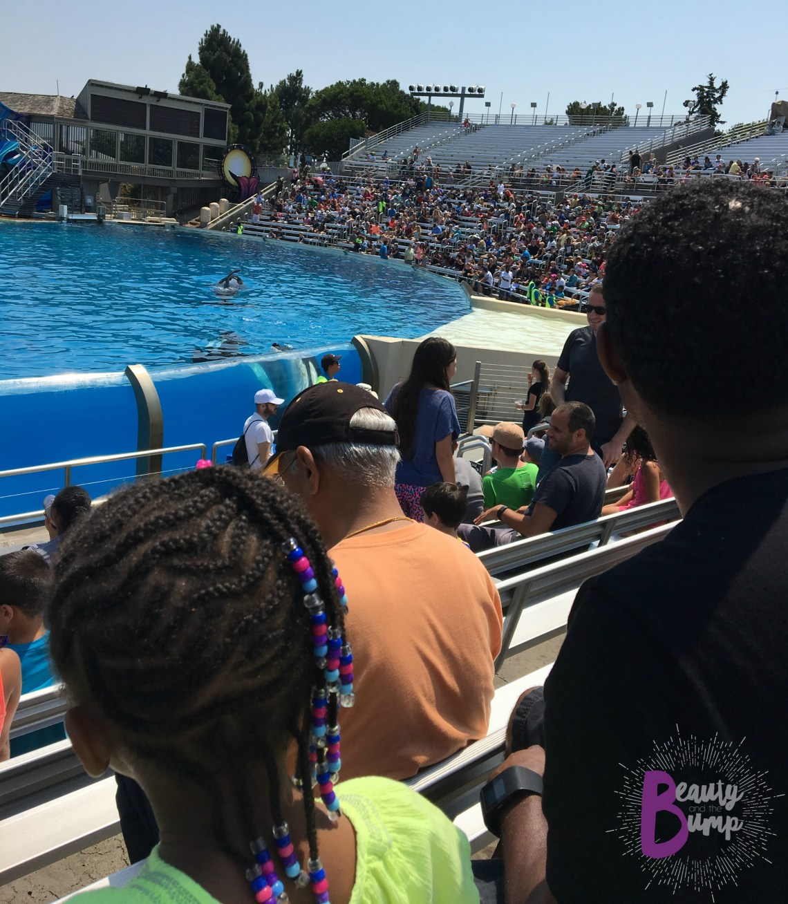 SeaWorld San Diego One Ocean Killer Whale Show