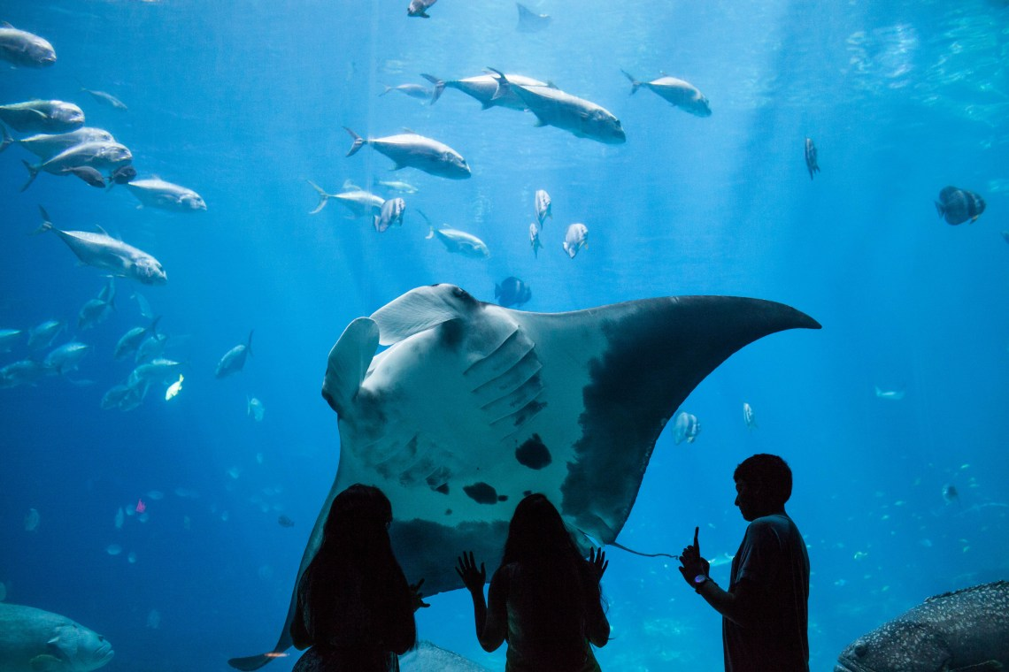 Top 5 Aquariums to Visit When Traveling - Georgia Aquarium