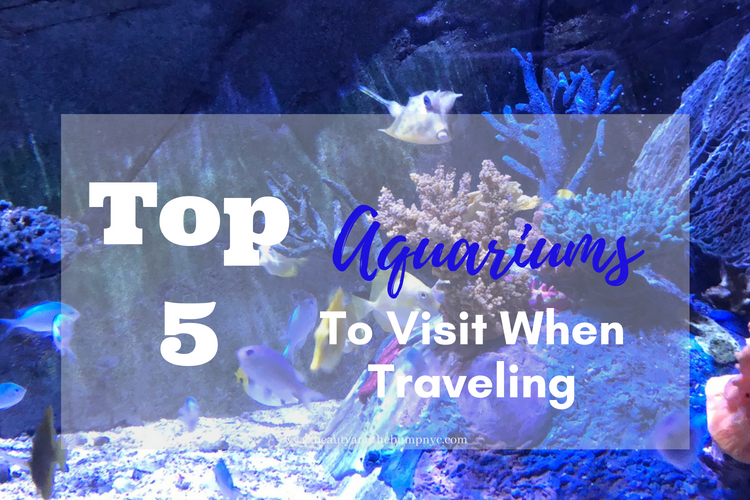 Top 5 Aquariums to Visit When Traveling