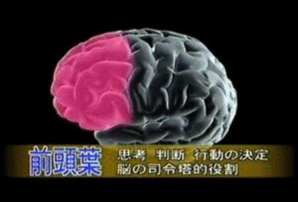 脳 前頭葉