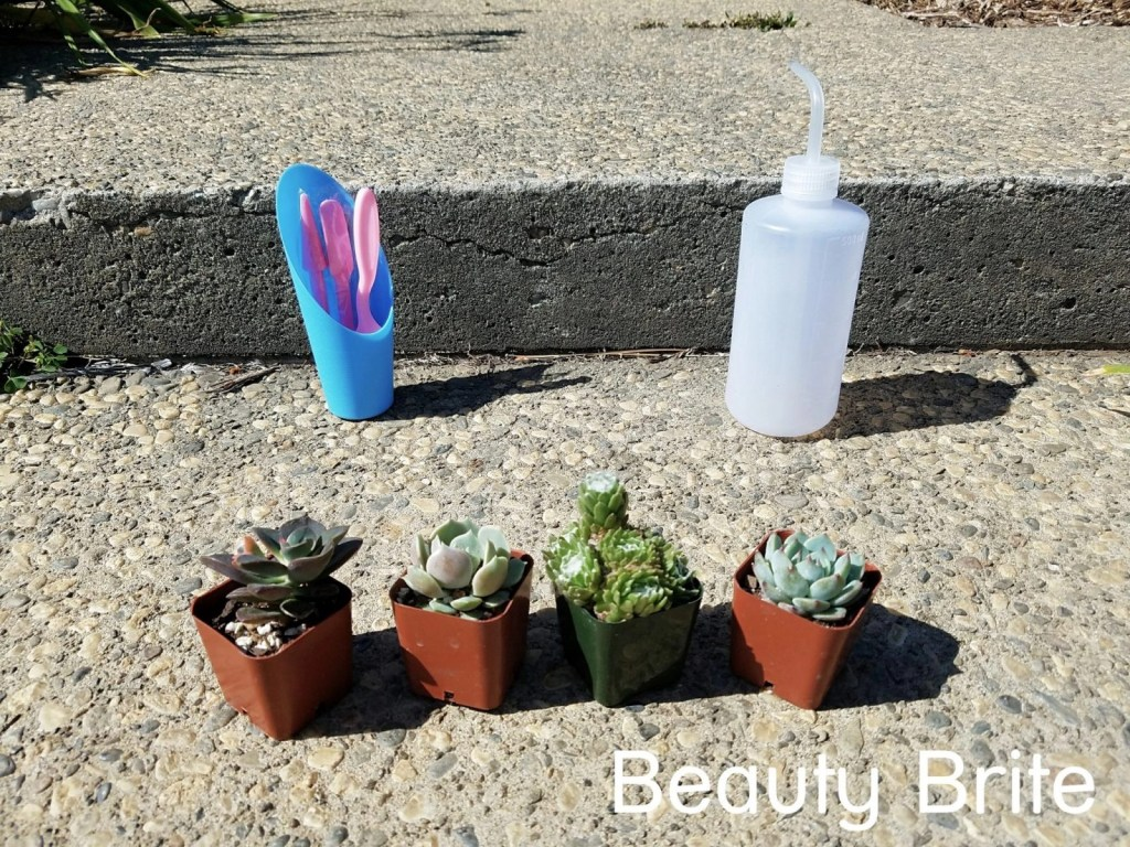 Succulents Delivered To Your Door - social media