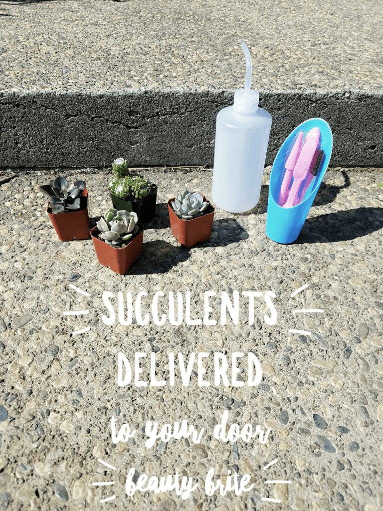 Succulents Delivered To Your Door