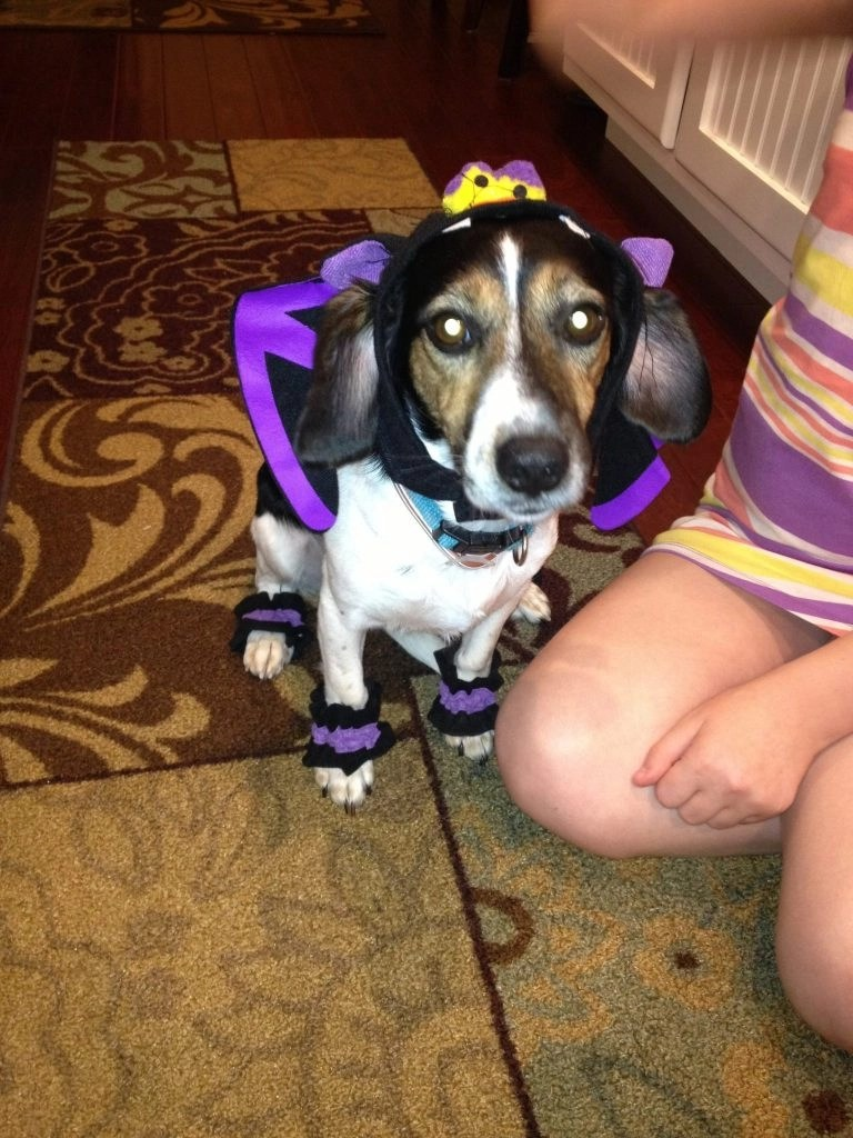 Halloween - Vampire-In-Training Pet Costume