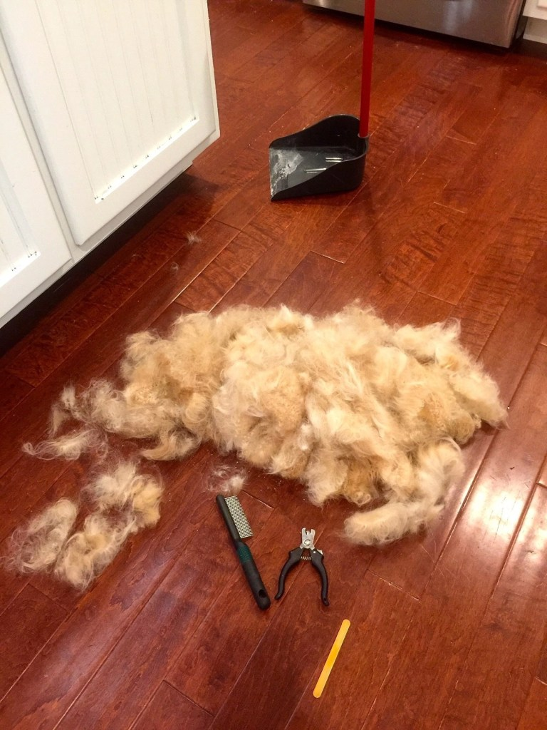 Pile of dog hair after grooming.