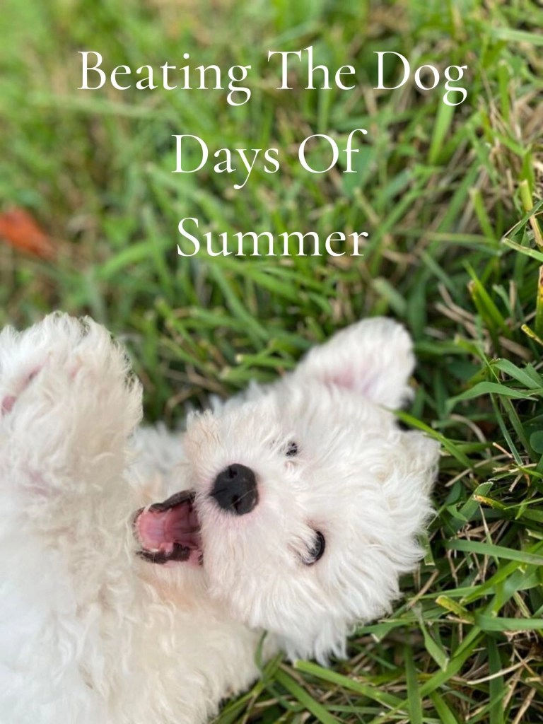 Beating The Dog Days Of Summer