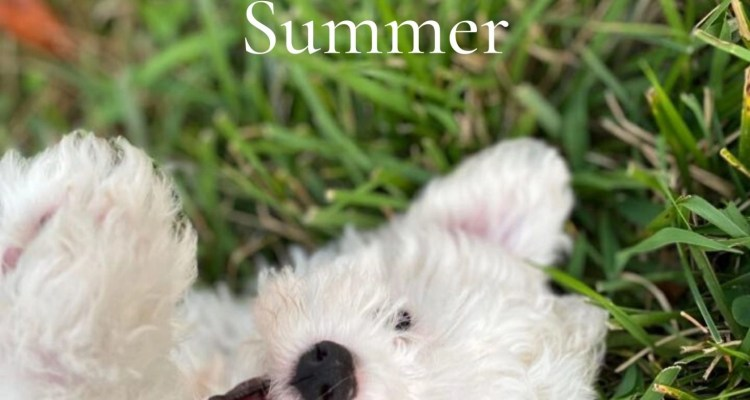 Beating-The-Dog-Days-Of-Summer