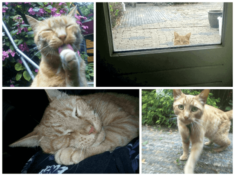 collage remy goed