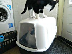 kattenbak inspecteren