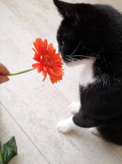 toulouse bloem (2)
