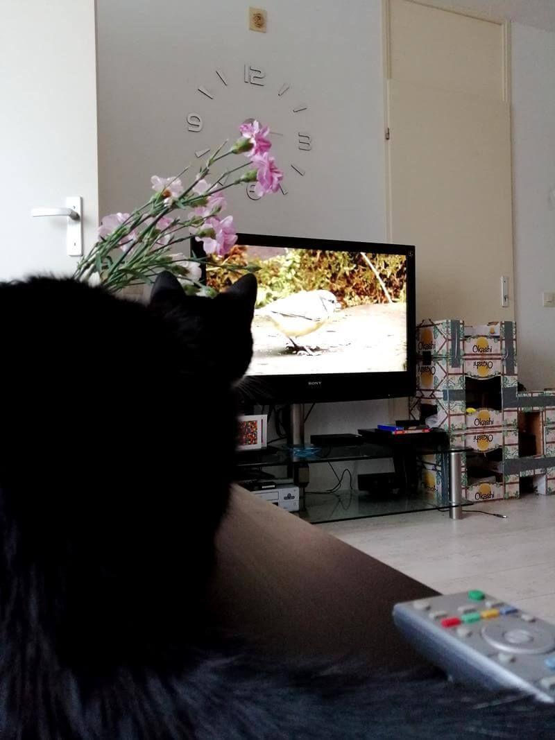 """KeeK op de WeeK 21- """"SPA"""" Moestuin, Kijk-Tip en Katten TV 21 moestuin KeeK op de WeeK 21- """"SPA"""" Moestuin, Kijk-Tip en Katten TV"""