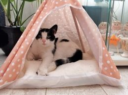 marie tipi tent