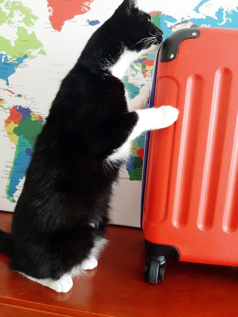 Wereldkaart? Check! Koffer? Check! Ga je mee op Reis? 29 wereldkaart Wereldkaart? Check! Koffer? Check! Ga je mee op Reis?