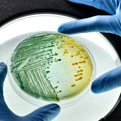 e-coli found in makeup and beauty tools Beauty Hygiene Plus