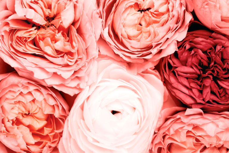 Beauty Image Lab Martina Lizzani Make Up Artist Pantone 2019 Living Coral 3