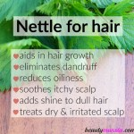 Benefits of Stinging Nettle for Hair Growth & More