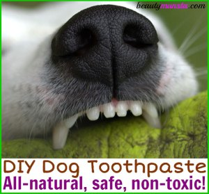 DIY Dog Toothpaste with Safe Essential Oils