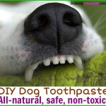DIY Dog Toothpaste with Safe Essential Oils