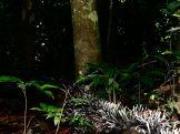 Amboro national parque (71)