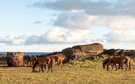 Rapa Nui (193)