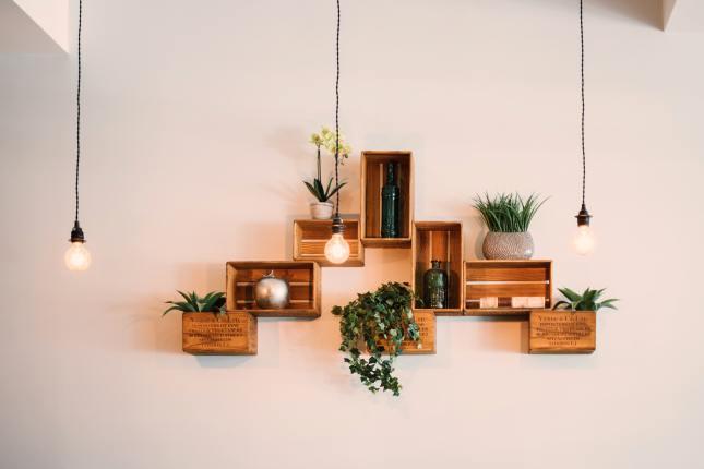 Najlepsze rośliny do mieszkania!