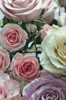 rosa-mazzo