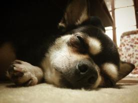 beauty-routine-shiho-dog