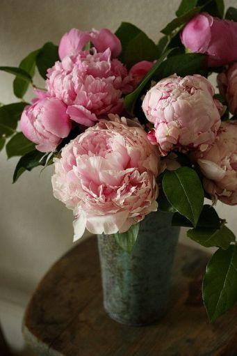 peonia-bouquet