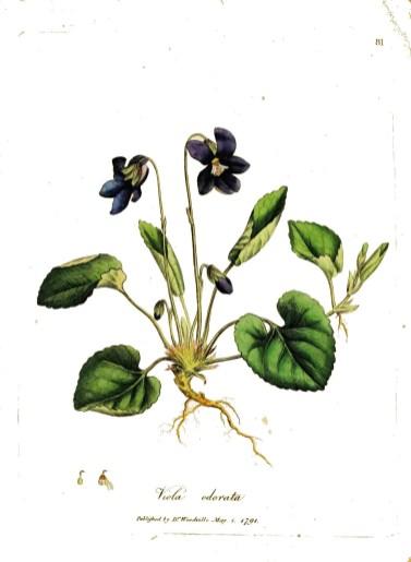 profumo-byredo_inez&vinoodh-violetta
