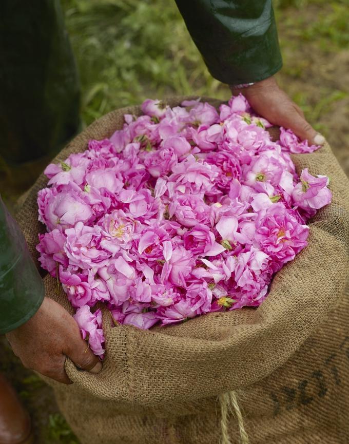 profumo-Feminin-Pluriel-rosa-di-grasse