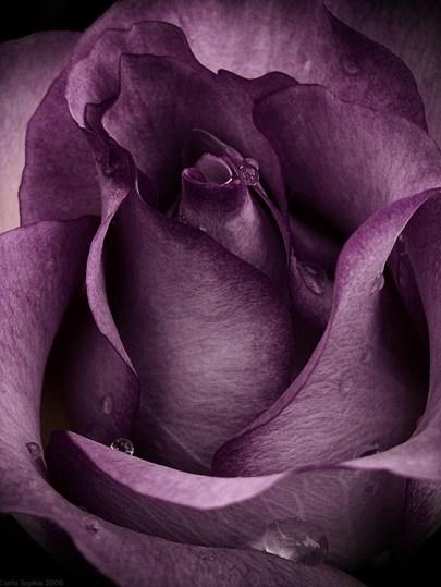 regali-di-natale-profumo-rosa-3
