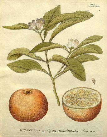 Gentlewoman-juliette-has-a-gun-romano-ricci-arancia-amara
