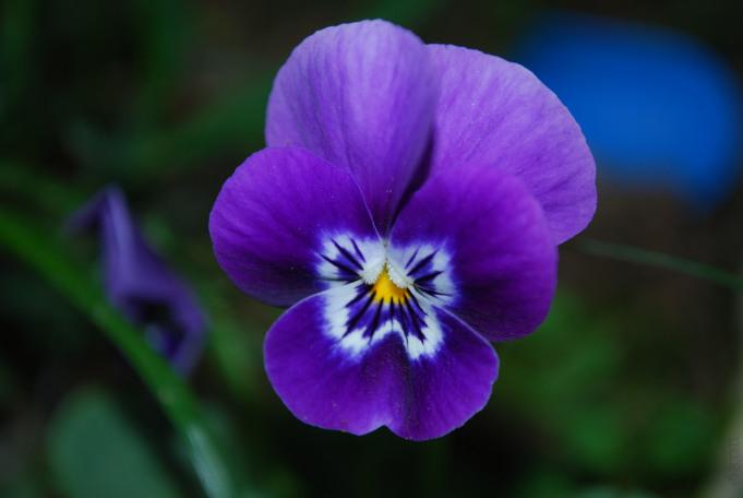 Juliet-Has-A-gun-Moon-Dance-violetta