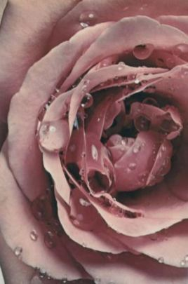Perfume-Questionnaire-Marie-Hélène-Rogeon--rose