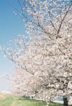 profumo-trama-simone-cosac-primavera