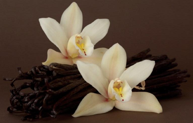 Aromatics-in-White-vaniglia