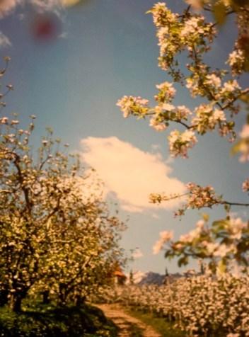 Florabellio-profumo-diptyque-note-olfattive-fiori-di-melo-2