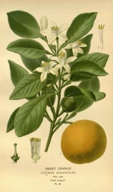 acqua-di-bergamotto-zegna-neroli-2
