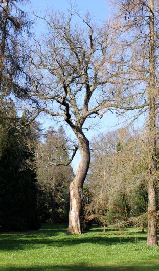 treeK