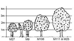 Achat groupé de porte-greffes